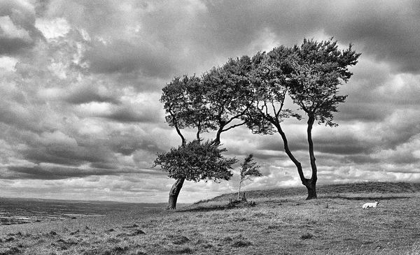 On Cleeve Hill near Cheltenham, Gloucestershire