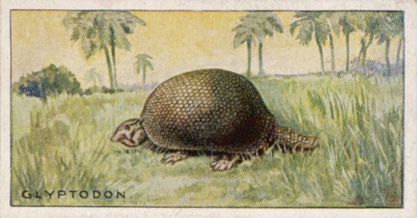 A glyptodon doedicurus: the extinct ancestor of the armadillo