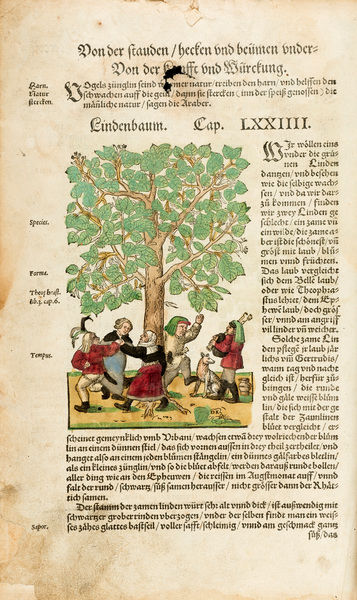 Peasants dancing round linden tree (full page). Illustration from Hieronymus Bock, Kreuterbuch. Date: 1560