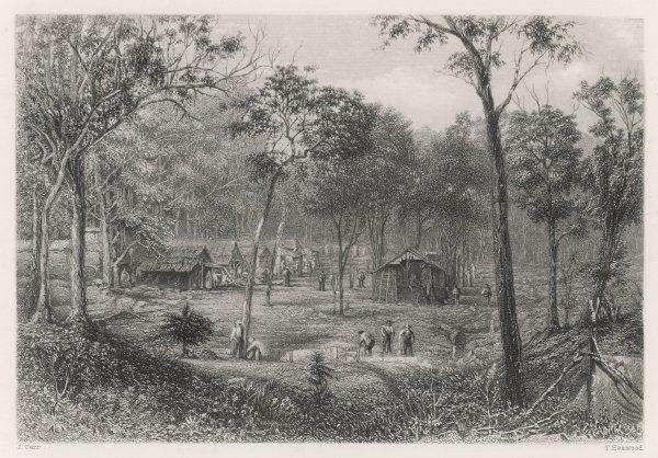 QUEENSLAND GOLD RUSH. Mary Evans - Prints Online
