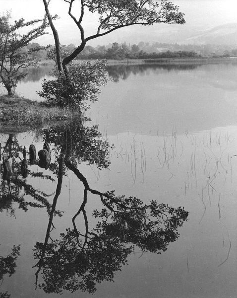 Tree and reflection, Derwentwater, Lake District, Cumbria