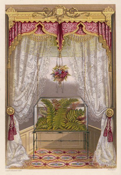 Wardian case containing ferns used as window decoration
