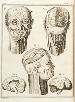 External and internal parts of the human head.