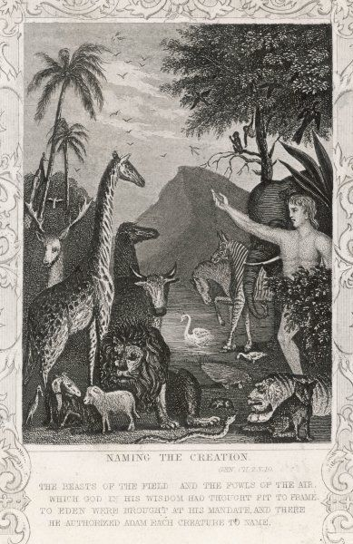 Adam in Eden names the creatures in creation