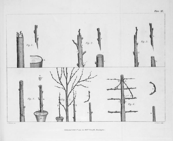 Arboreal grafting processes, 2 copies: B/W & colour. Engraving, probably by H. Mutlow, from William Forsyth, A treatise on the culture and management of fruit trees. Plate XI. Date: 1806
