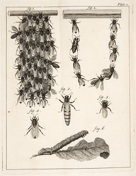 Beehives, queen bees, and worker bees. Illustration from Gilles August Bazin, The natural history of bees. Date: 1744