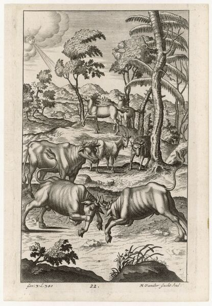 Cattle farming: rival bulls battle for the leadership of the herd. Date: First published: 29 BC