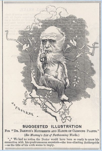 Charles Darwin as a tree-climbing anthropoid