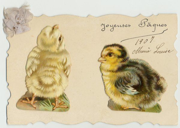 TWO CHICKS. Two chick 'scraps' on a card