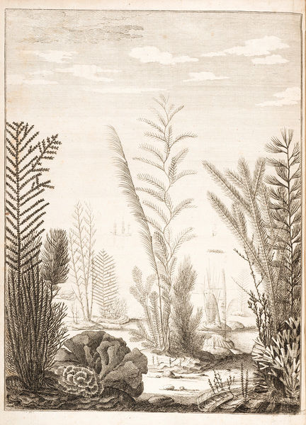 Corals, with ships/boats in background. Illustration from John Ellis, Essai sur l'histoire naturelle des corallines, et d'autres productions marines. Frontispiece. Date: 1756