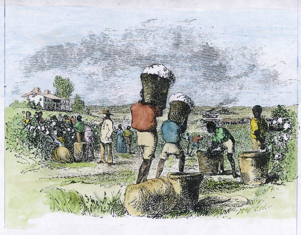 COTTON PICKING. Picking cotton in the southern United States