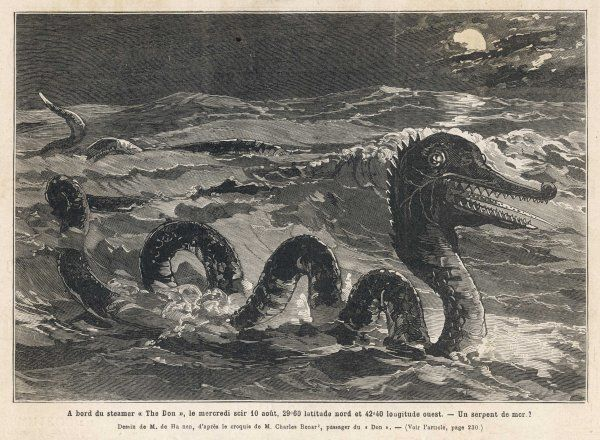 This impressive creature was seen by several aboard the Royal Mail steamer 'Don' in the Atlantic, and sketched by a witness