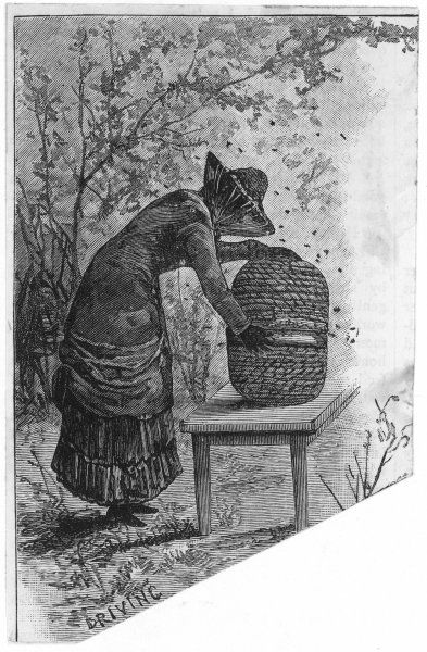 DRIVING THE BEES from the old hive to the new ; illustration to 'The Pleasure and Profits of Bee-Driving'