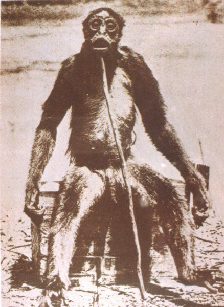 Ape like creature, that was shot and killed in the Colombian and Venezuela Jungles by Francois de Loys. Date: 1917