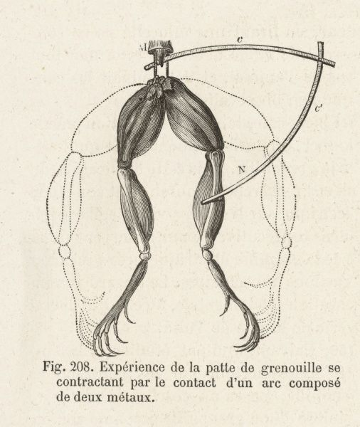 Experiment devised by Luigi Galvani, showing movement of Frog legs due to electrical current