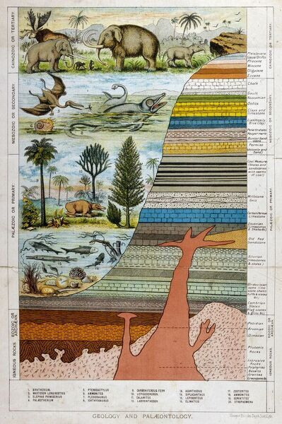 A schematic representation of geology and palaeontology
