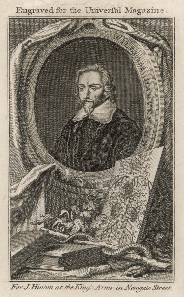 HARVEY (1578-1657). WILLIAM HARVEY English physician and anatomist