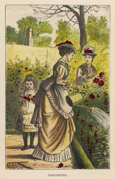 A lady waters the rose garden