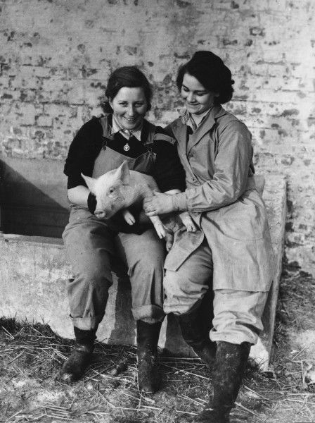 Land Girls WWII. Land Girls holding a pig on a farm during World War II