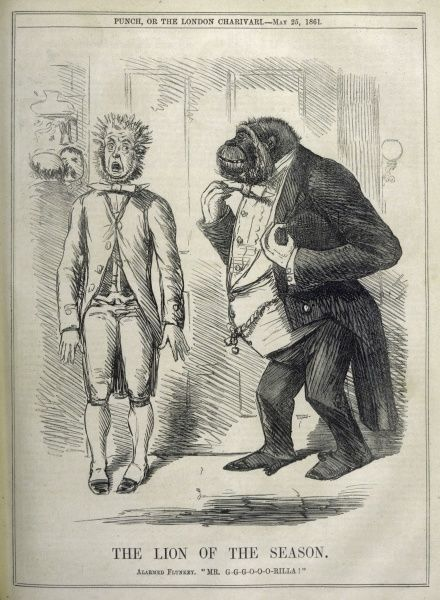 An alarmed flunkey introduces Mr Gorilla as 'The lion of the season,' a comment on explorer Paul du Chaillu's book on equatorial Africa with its eyewitness account of gorillas