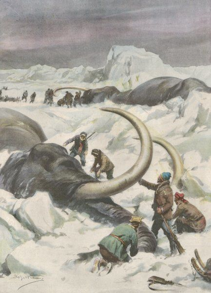 Two mammoths are found frozen in the Jamalm Peninsula, 2400 kilometres north of Saint Petersburg