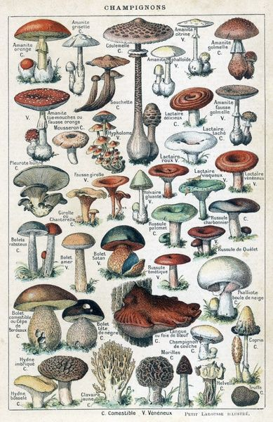 A large number of mushroom varieties, with helpful information on which ones are edible, poisonous, or suspect