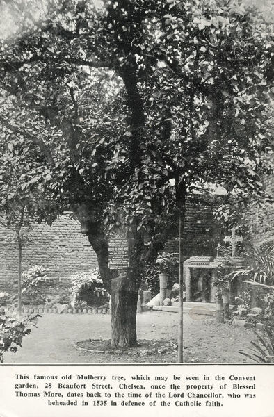 Old Mulberry Tree - Convent Garden, Beaufort Street, Chelsea - once the property of Blessed Sir Thomas More, dates back to his time (allegedly) - More was beheaded in 1535 in 'defence of the Catholic Faith'. Date: circa 1920s