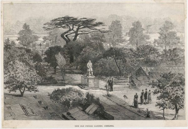 View of the Old Physick Garden in Chelsea, London