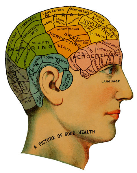 A phrenological head, showing the different categoies of the brain which should exist in healthy humans. These include self perceptive, aspiring and animal morals