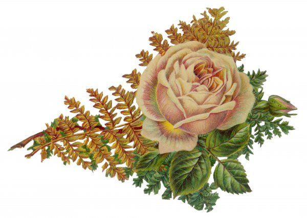 ROSE SCRAP. Yellow rose with foliage Date: late 19th century