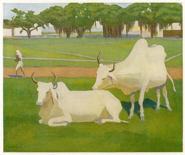 SACRED COWS, INDIA. Sacred Indian cows