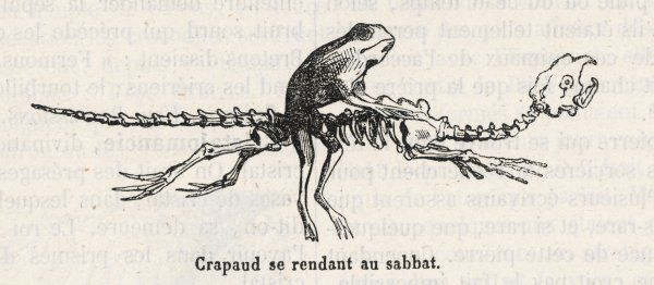 A toad - a witches' 'familiar' - rides to the sabbat mounted on an animal skeleton