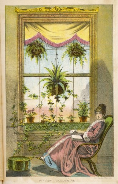 Window Gardening. A Victorian woman sits in a comfortable armchair reading a book