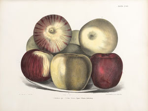 Apples, three varieties.