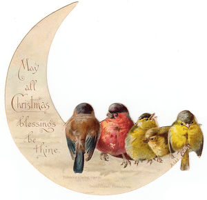 Birds perched on crescent moon on a Christmas card