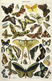 BUTTERFLIES IN LAROUSSE