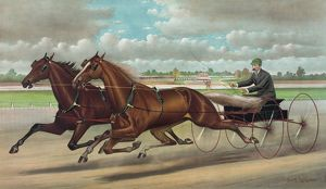The celebrated trotting Team Edward and Swiveller