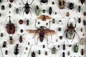 A collection of beetles