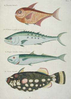 Colourful illustration of four fish