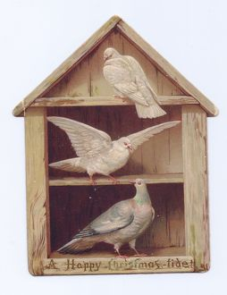 Two doves and a pigeon on a shaped Christmas card