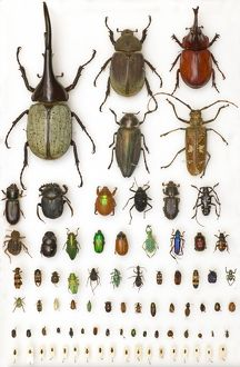 Entomology Specimens
