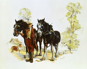 Farmer with a pair of shire horses