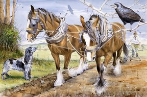 Farmer and team of working horses plough a field