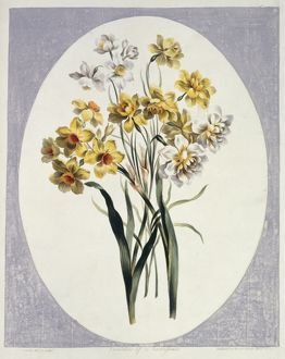 Folio 65 from A Collection of Flowers by John Edwards