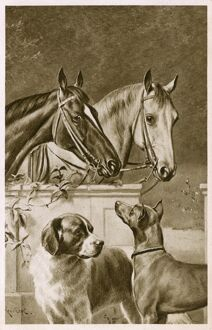Two Horses and a pair of dogs