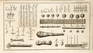 Illustration of growing and managing trees.