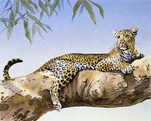 A large Leopard reclining on a branch