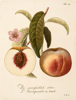 Two peaches: whole and section.