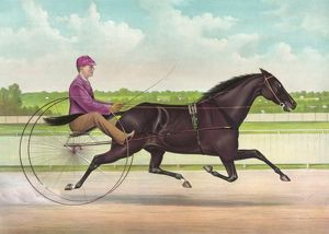 The phenomenal trotting gelding Jay Eye See, by Dictator, da