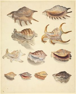 Plate 77 from the John Reeves Collection